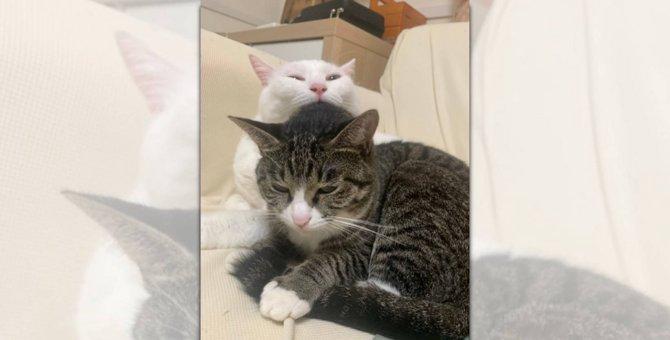 【話題】奇跡の瞬間を激写!「猫の共食い」疑惑にネット民ざわつく