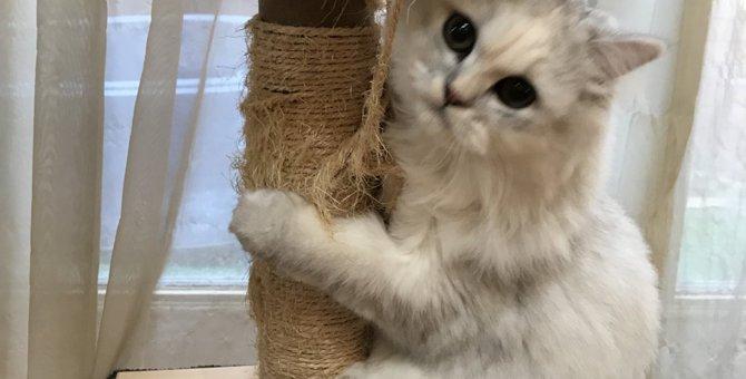 見逃さないで!!猫が発する些細なSOS