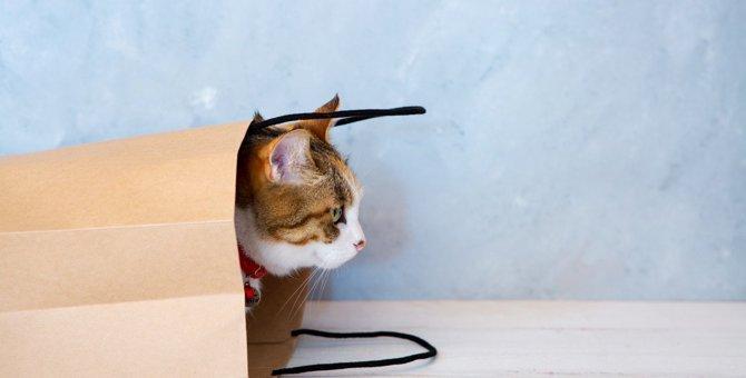 猫の飼い主もお迎え検討中の人も!絶対知っておくべき『猫の行動・習性とその理由』4選