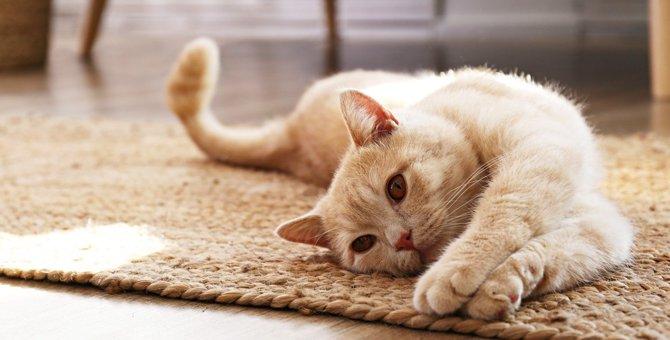 『リラックスしている』猫だけがする仕草5選