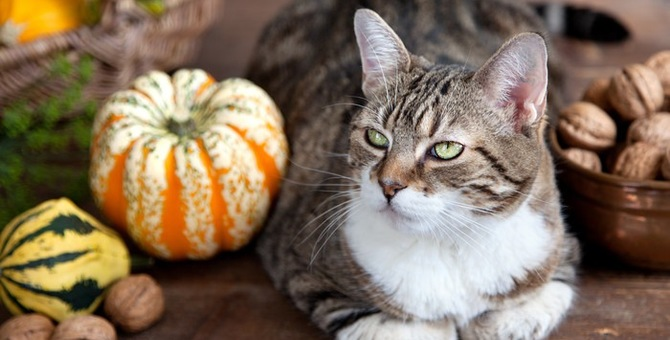 猫はくるみを食べても大丈夫?注意点と対処法