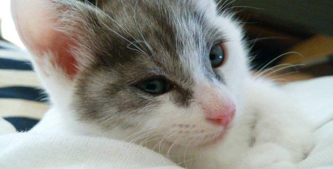 やんちゃな保護猫「のり」が教えてくれたこと