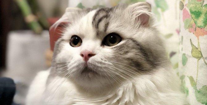 Laylaの12猫占い【2/10~2/16】のあなたと猫ちゃんの運勢