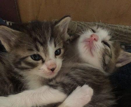 猫と仲良くなれる動物3選