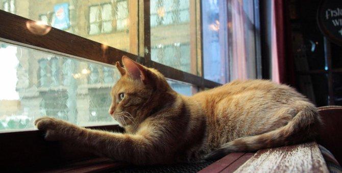 猫は網戸を登って脱走する?その対処方法とは