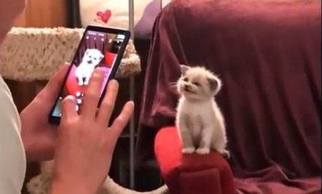 シェルターにいた子猫はもらわれてから最高の笑顔が止まらない!