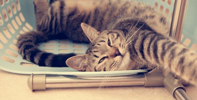 猫が流し目をする時の5つの意味と注意したい事