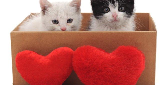 猫の求愛行動とは?代表的な物3選