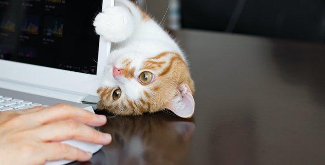 猫が飼い主を遊びに誘っている時の仕草や行動4つ