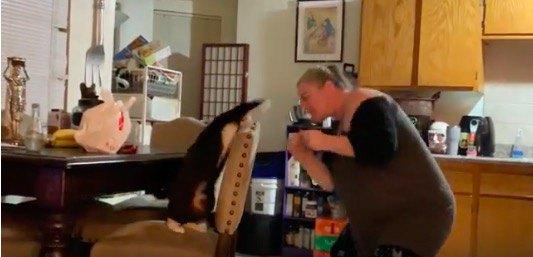 人間VS猫!ボクシング対決を制するのはどっちだ!?