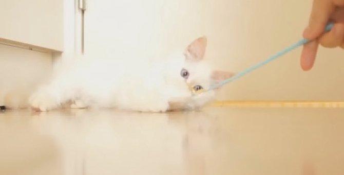 子猫も夢中♡猫の心を掴んで離さないオモチャはやっぱりコレだった!