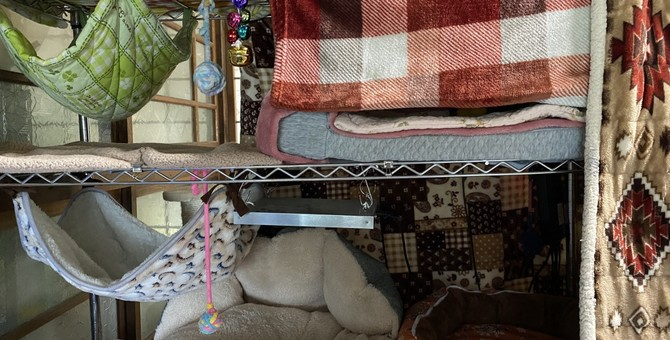 猫のためにスチールラックを使ったベッド置き場制作!