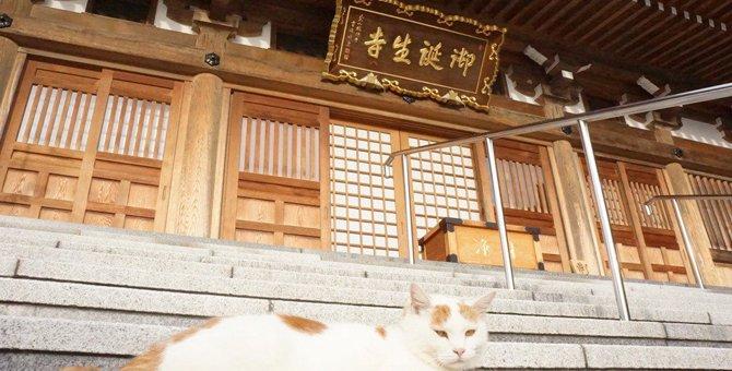 福井の猫寺『御誕生寺』猫好きさんが集まるその訳とは?
