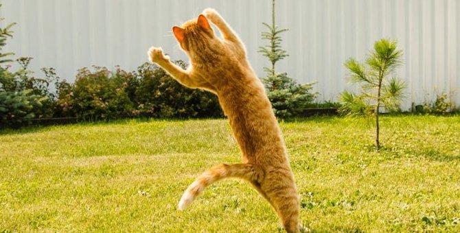 猫のテンションが高くなる4つの時!怪我のリスクに注意