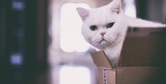 白猫の里親になりたい!探し方と迎え入れるまでの手順