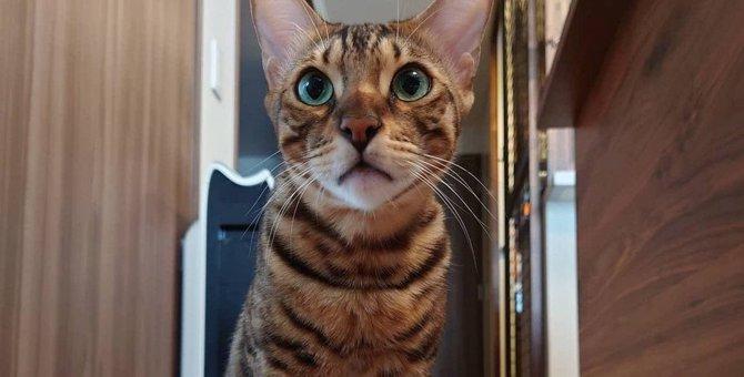 猫とフローリングで快適に暮らすための対策3つ