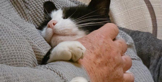 『愛猫が夢に出てくるとき』の心理状態4選!何かの暗示?どんな意味があるの?