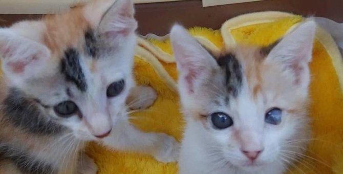 子育て中に次の子を妊娠した野良母猫を保護。子猫は【魚アレルギー】
