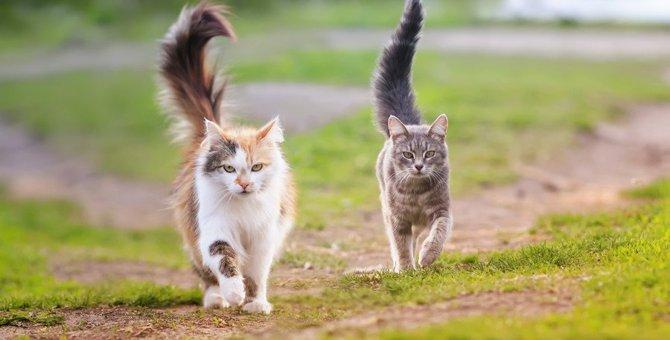 猫が急に『全力疾走するとき』の深層心理4選