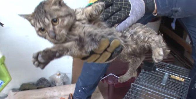 転げるように階段を降り、風に吹き飛ばされ、普通に歩けない猫