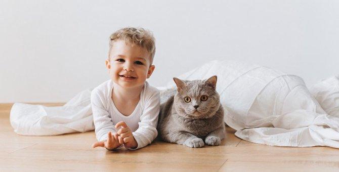 猫と幼児の暮らし 注意すべき4つのこと