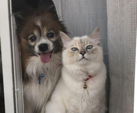 猫と犬の飼い方の違い5つ