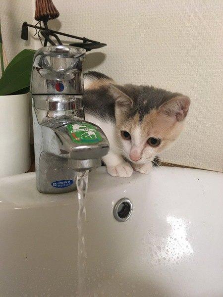 水遊びが好きな猫と嫌いな猫の違い4つ