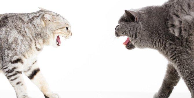 猫同士の喧嘩が生じる理由や止め方、多頭飼いの猫が仲良くするには