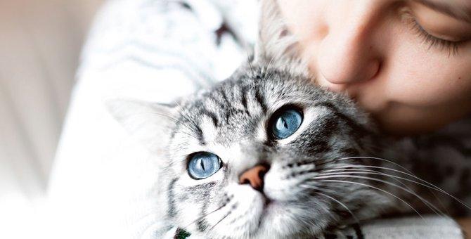 猫という生き物について