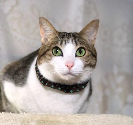 猫の目の色は何種類ある?それぞれの特徴について