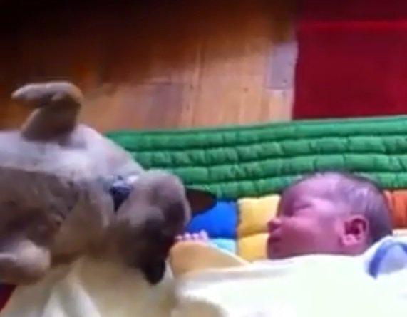 猫ちゃんと赤ちゃんの初対面!仲良くなれるかな?