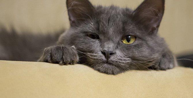 猫が『苦手だニャ〜』と感じる人に見せる仕草5つ