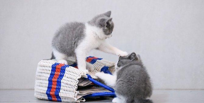 猫の喧嘩で最も多い攻撃は噛みつき