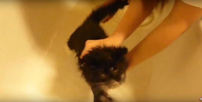 シャワーから逃げてたらルームランナーみたいになっちゃった猫ちゃん