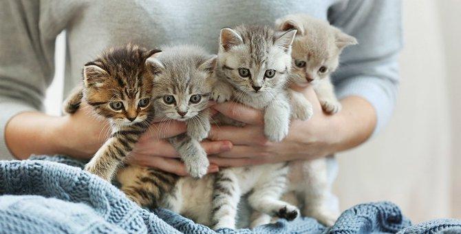 子猫のしつけ方のポイントは?トイレ、噛み癖、正しい叱り方を紹介