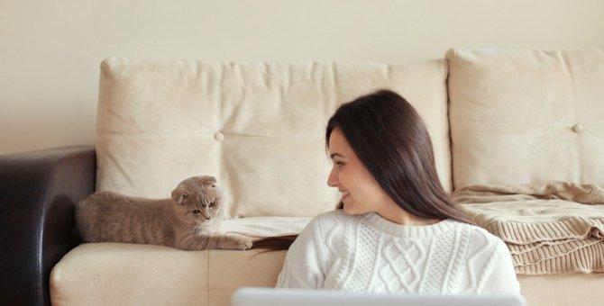 猫が飼い主の後ろに来る6つの心理