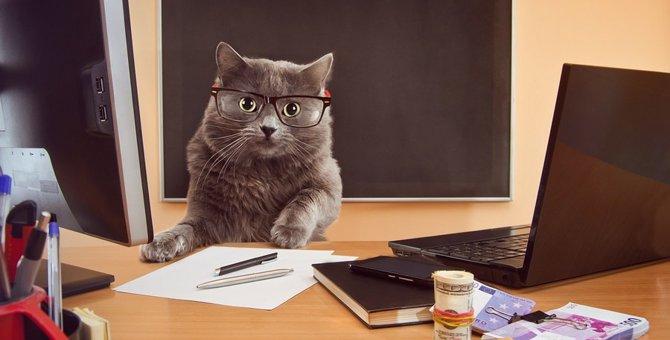 怠けてばかりじゃない!働く猫達8選