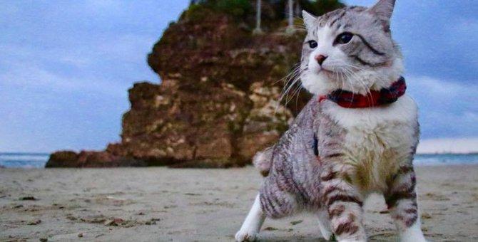 元野良猫「ニャン吉」がかわいい!話題の写真からグッズの紹介まで
