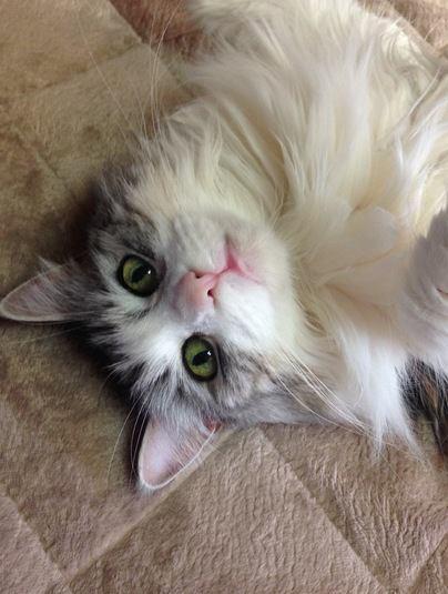 猫が飼い主に懐いている時にする行動6つ