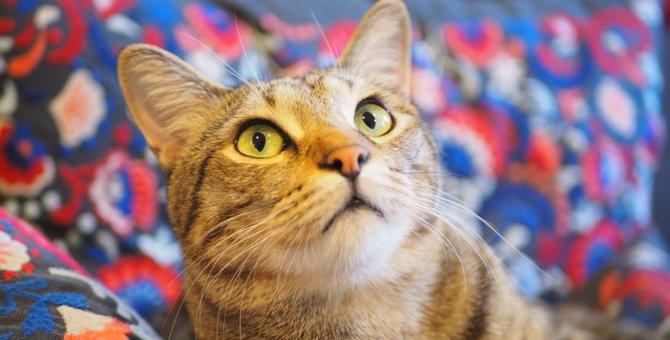 猫の『本音』を読み取る方法3選