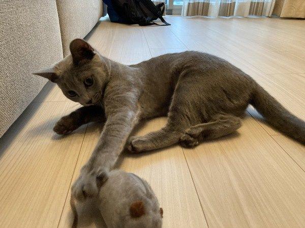 猫が前足で『パシパシ』叩くときの心理4つ