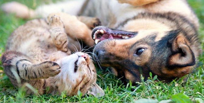 二匹は仲良し♪犬と猫が共同生活するために大切なこと