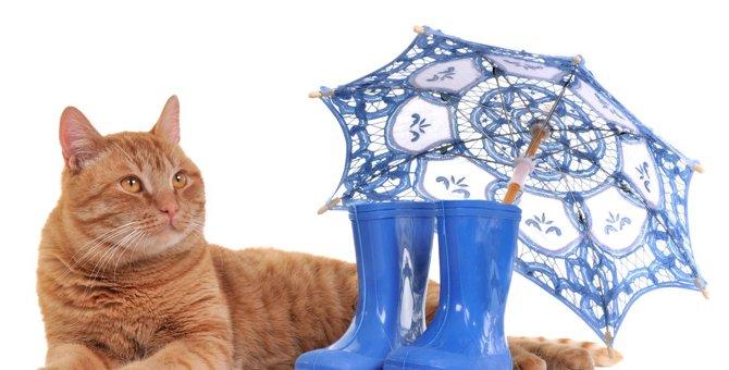 猫が梅雨に発症しやすい危険な病気4選と予防法