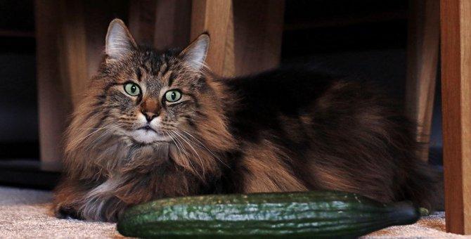 猫が『興味がないニャ〜』と思っている時に見せる仕草5つ