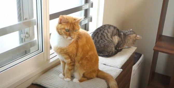 季節外れの雪で興奮した猫ちゃん!ちょっとおかしなテンションになっちゃう?