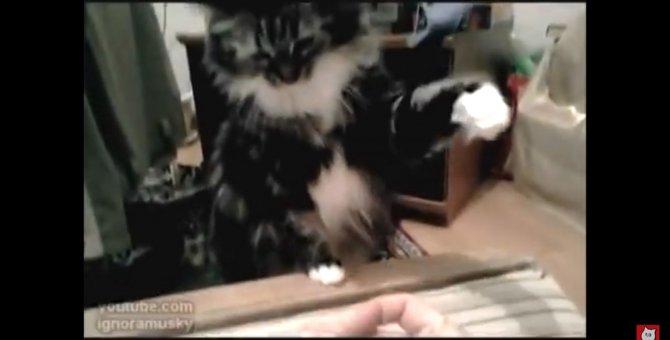 全てが嫌い!どうしても指パッチンが許せない猫ちゃん