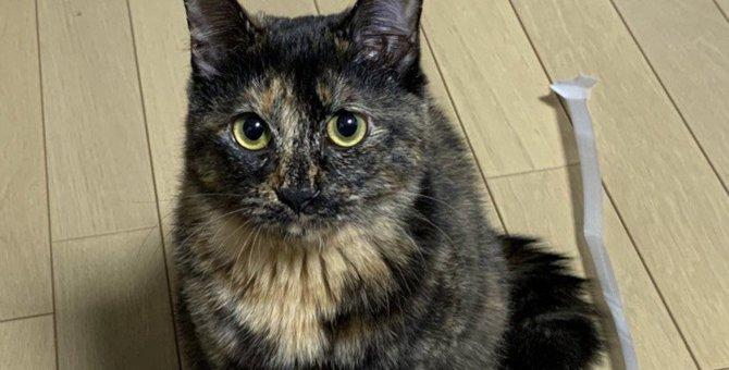猫が『懐いている人』だけに見せる態度6つ