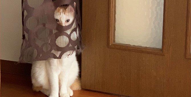コレだから猫ってやつは!色々と『見えすぎ』ている猫さんが大人気♡