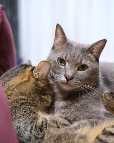 猫が飼い主さんを守っている時にする『3つの仕草』