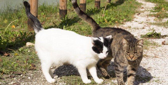 猫の去勢時期と注意点について
